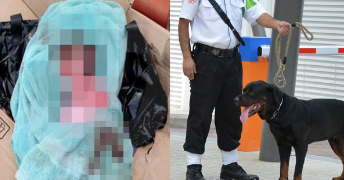 e696b0e5bbbae9a1b9e79bae 29.png?resize=1200,630 - 「ゴミ箱」から生まれたばかりの赤ちゃんの泣き声?!…駆け付けて命を救ったのは○○だった!!