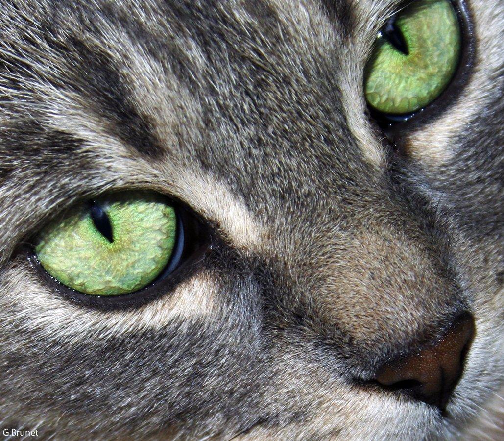 face de chat.jpg?resize=412,232 - Parler aux animaux nous rend plus intelligent et sensible