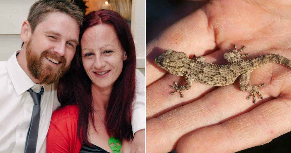 gecko2.png?resize=412,232 - Man Who Was Dared To Eat A Gecko At A Party With Friends Passes Away In 'Absolute Agony'