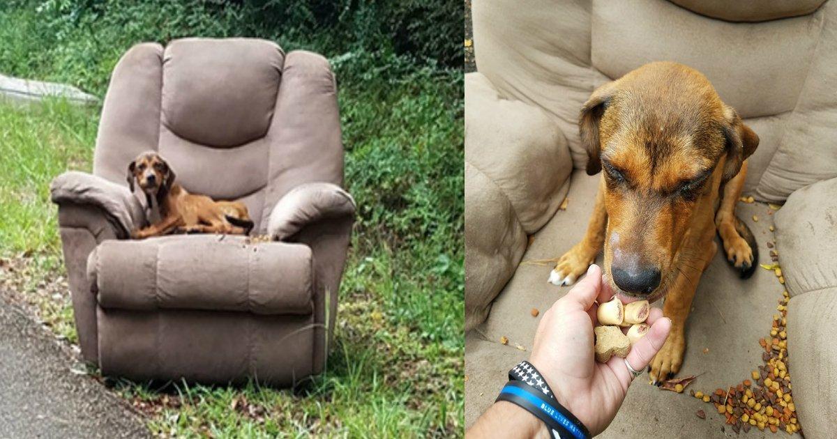 inu.jpg?resize=1200,630 - 【飼育放棄】不法投棄されたソファーに座って飼い主を待ち続ける子犬…