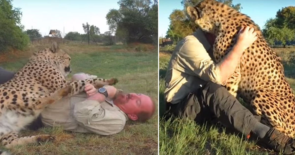 man cheetah best friend.jpg?resize=412,232 - Man Has Developed A Special Bond With A Cheetah And Now Planning To Buy Him Officially