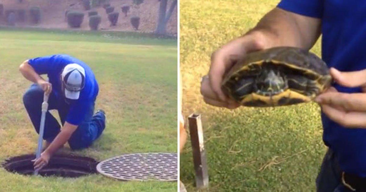 man rescues turtle.jpg?resize=1200,630 - Une famille a sauvé une tortue d'un sort funeste