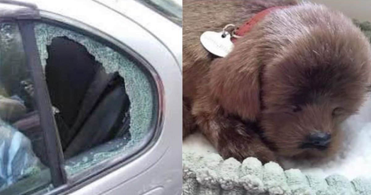 man smashed car window to save a pooch which turned out to be a toy dog.jpg?resize=1200,630 - A Man Smashed The Car Window To Save A 'Pooch' That Turned Out To Be A 'Toy' Dog