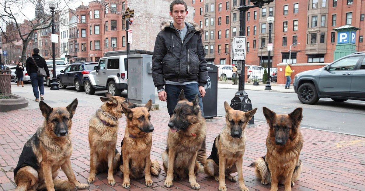 man walks dogs.jpg?resize=300,169 - Un homme marche dans les rues avec ses bergers allemands sans laisse
