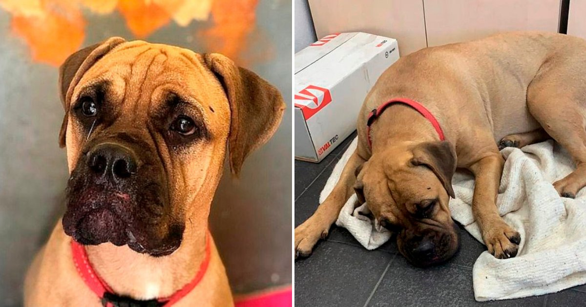 maru6.png?resize=412,232 - Loyal Dog Walks 125 Miles To Get Back To Owner Who Already Abandoned Her