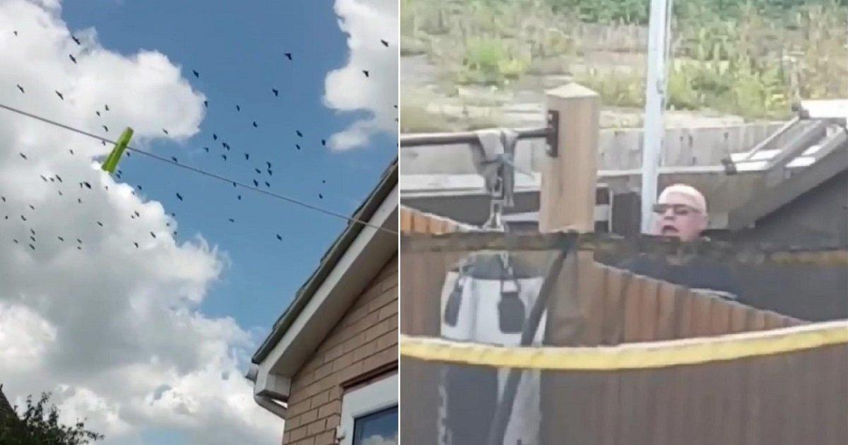 p3 8.jpg?resize=412,232 - Un homme attire plus de 300 corbeaux sur la pelouse de son voisin juste pour l'embêter