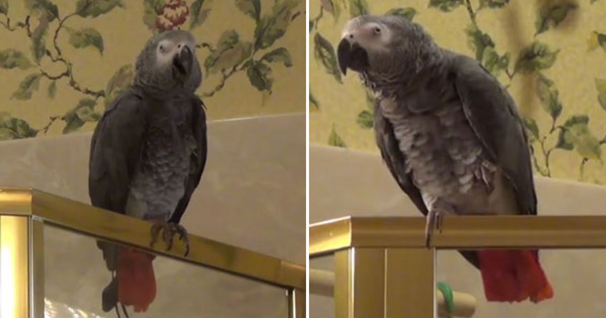 """parrot sings.jpg?resize=412,232 - Parrot Sang """"Who Let The Dogs Out"""" And Took The Internet By Storm"""