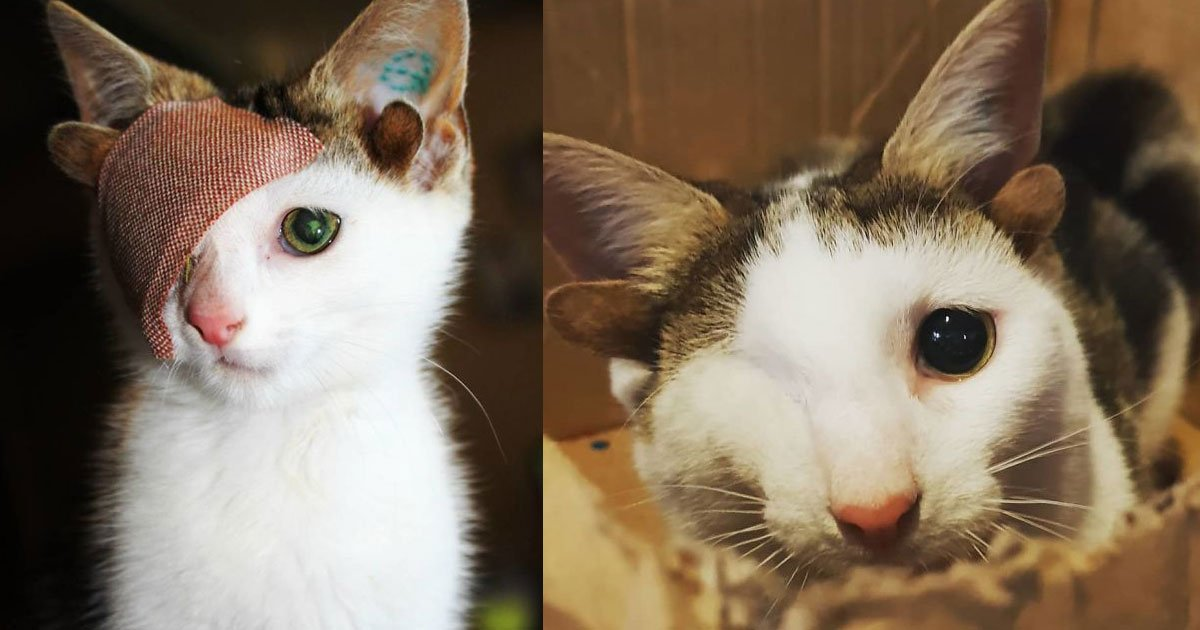 rescued cat born with four ears and one eye found a loving family.jpg?resize=412,232 - A Rescue Cat Born With Four Ears And One Eye Found A Loving Family At Last