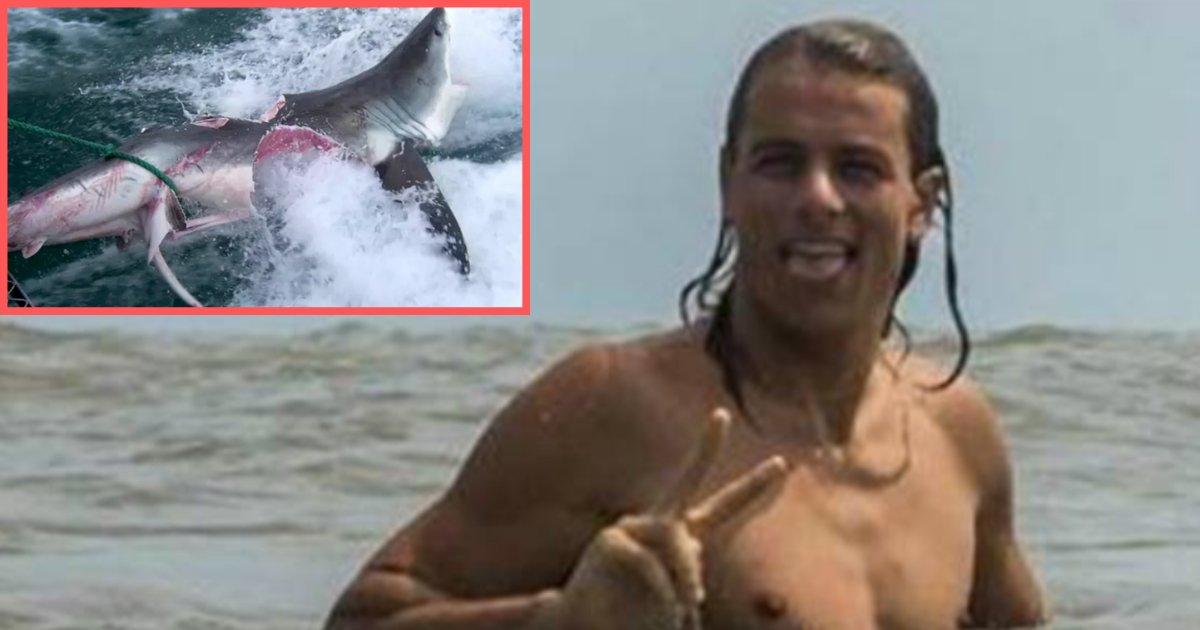 s4 23.png?resize=412,232 - Un surfeur qui s'est fait mordre par un requin s'est rendu dans un bar pour boire un verre avant d'aller chez le médecin