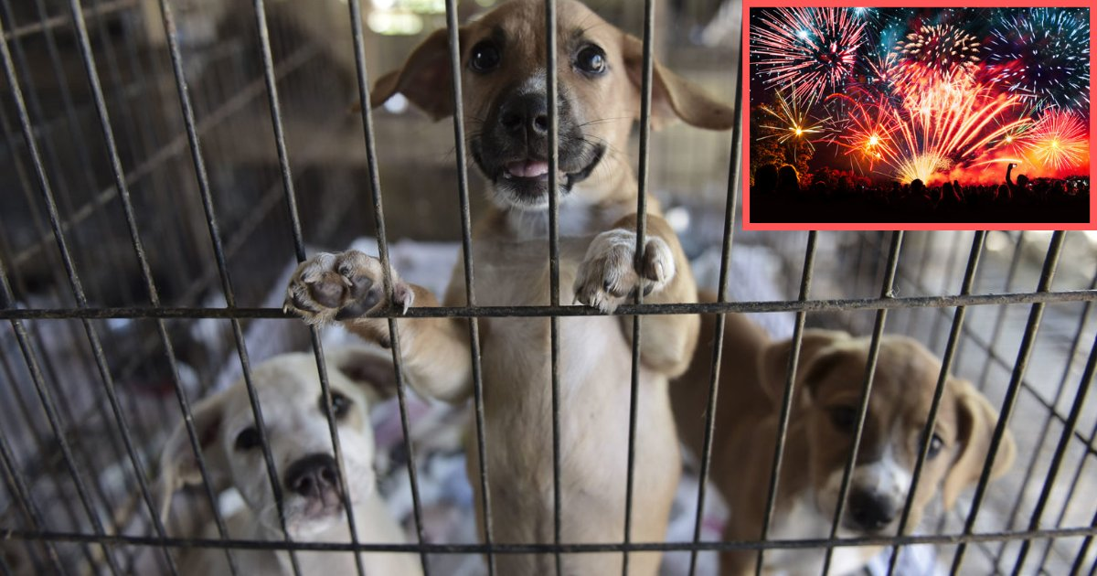 s5 4.png?resize=412,232 - Florida Convicts Embraced Shelter Dogs Who Were Troubled by Fireworks This Past Independence Day