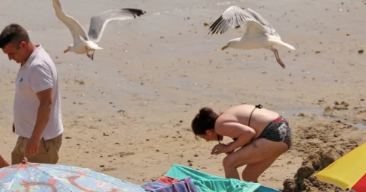 s6 16.png?resize=412,232 - Aggressive Seagulls Have Come Down to Attacking Humans by Swooping Down