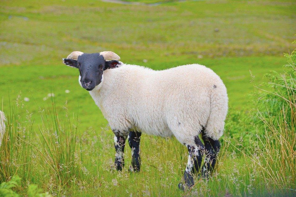 scotland 2499767 960 720.jpg?resize=188,125 - Berger de 2500 moutons sur une île écossaise, ça vous dit ?