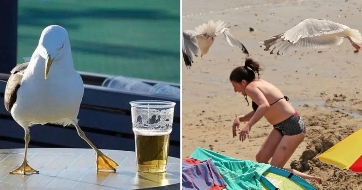 seagull5.png?resize=412,232 - Boozed-Up Seagulls Are Vomiting On People, Falling Off Roofs And Flying Into Cars
