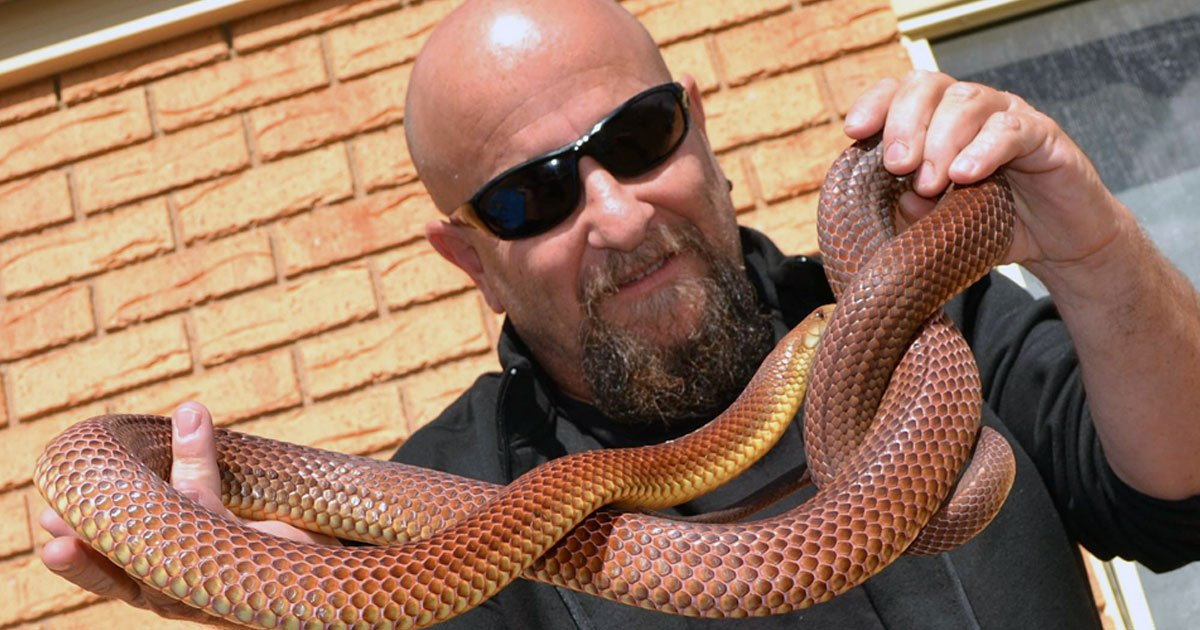 snake catcher.jpg?resize=300,169 - Australian Snake Catcher Catches The World's Deadliest Snakes With His Bare Hands