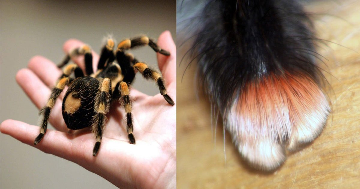 tiny paws sipders.jpg?resize=412,232 - These Tiny Paws Of Spiders Are Just Too Cute