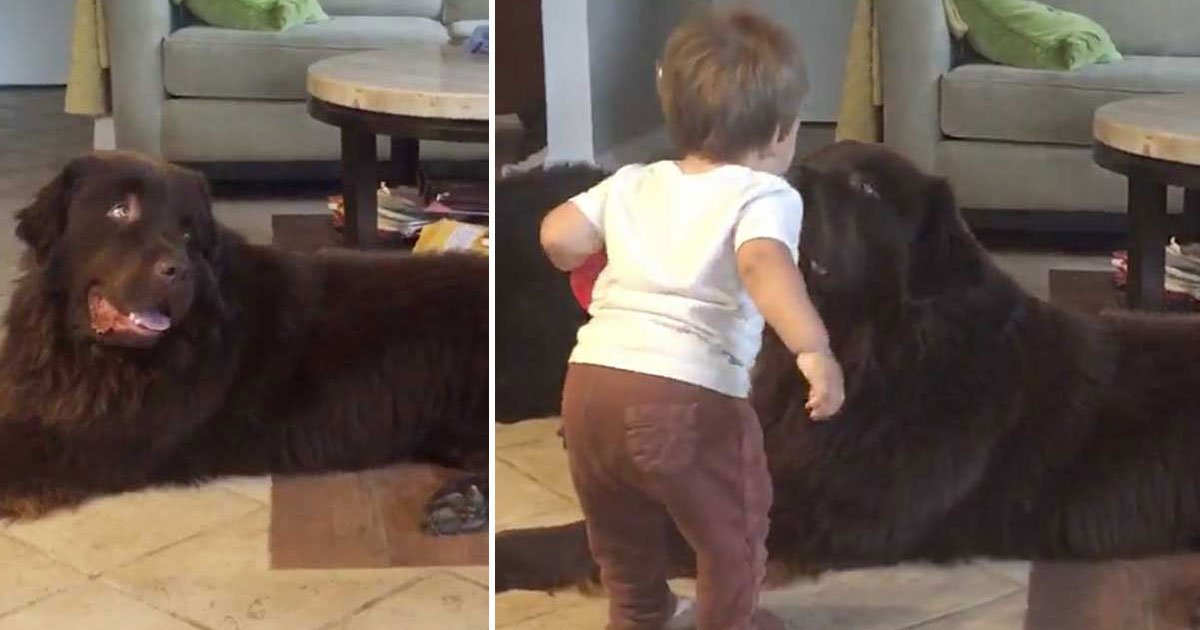 toddler kisses dog.jpg?resize=412,232 - Toddler's Reaction After He Gave A Kiss To His Best Buddy
