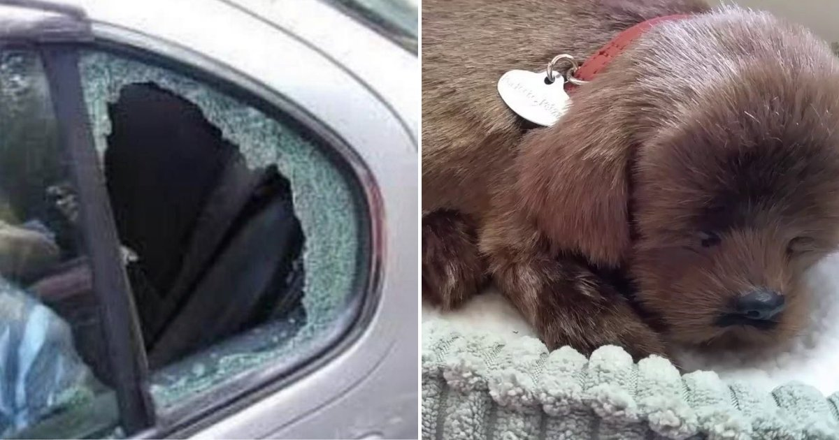 toydog.png?resize=1200,630 - Driver Was Left Fuming When He Returned To His Car And Found Someone Had Smashed The Window To Save TOY Dog