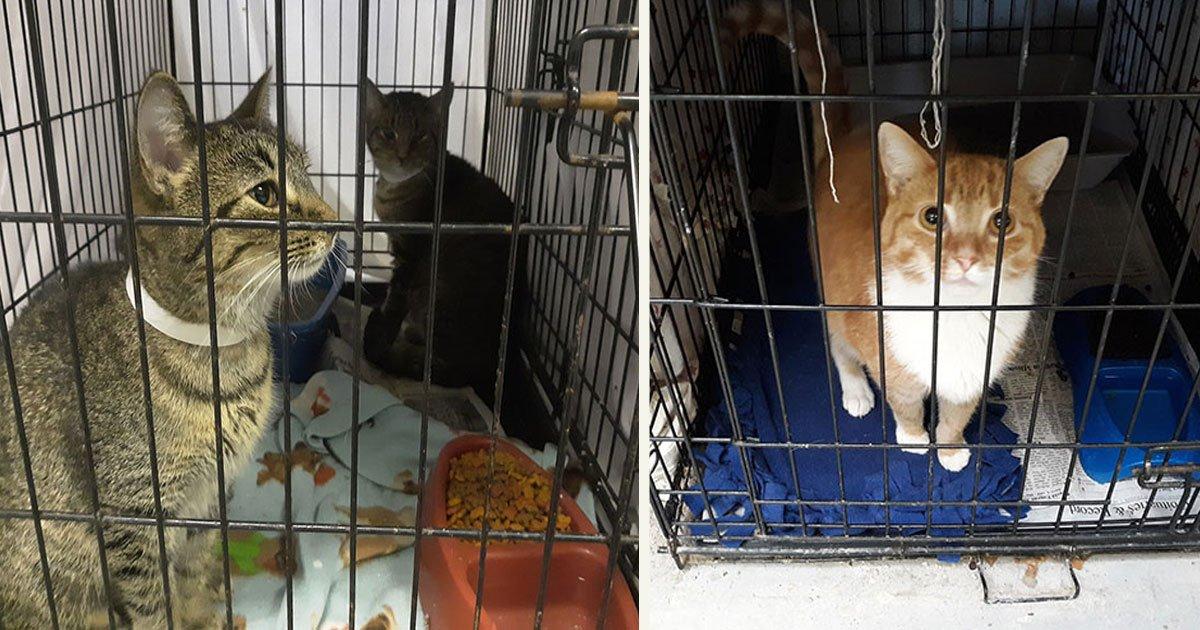 untitled 1 104.jpg?resize=1200,630 - Payer sa contravention en faisant un don de nourriture pour chats