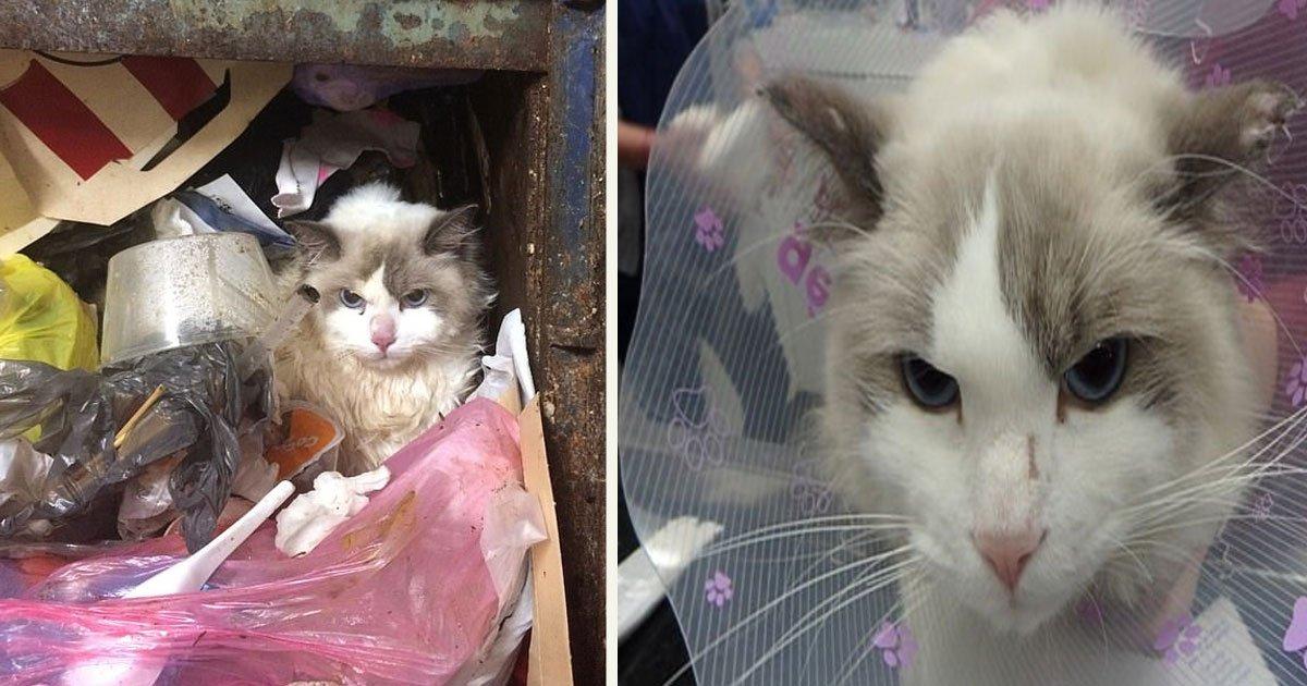 untitled 1 16.jpg?resize=300,169 - Un homme jaloux a jeté le chat de sa petite amie dans une chute à déchets