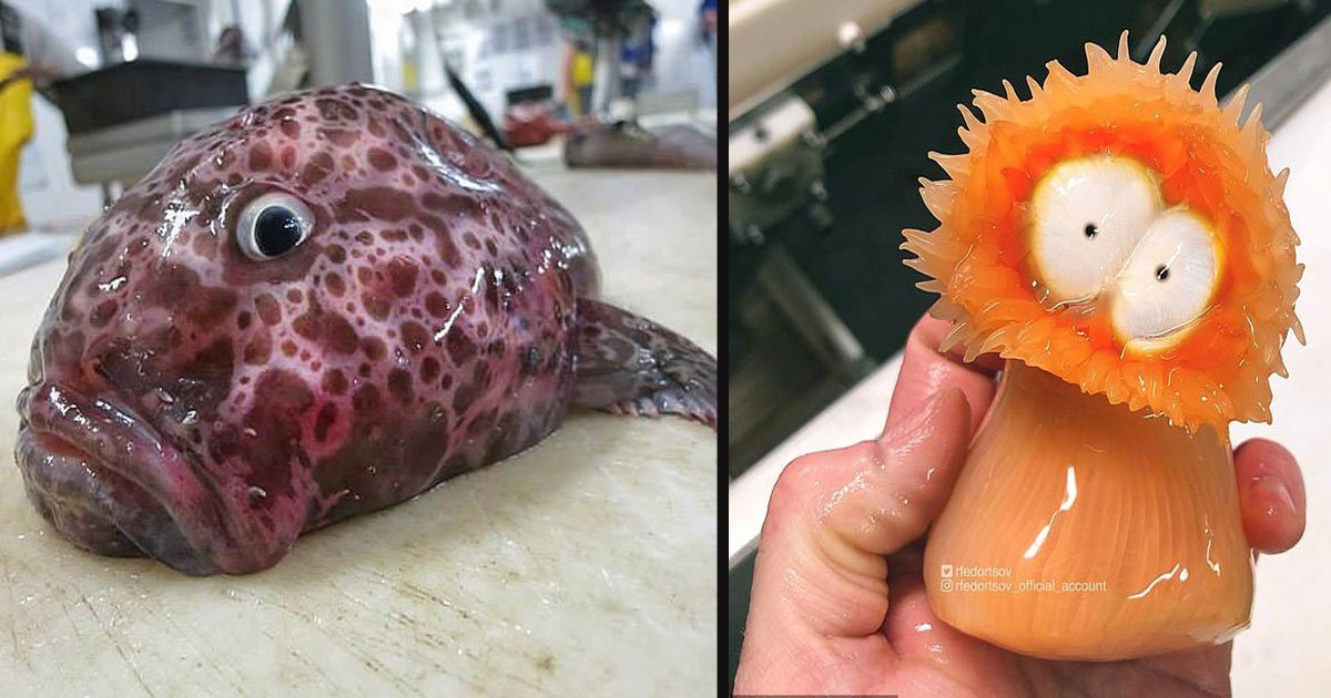 untitled 1 3.jpg?resize=412,232 - Russian Fisherman Shared Pictures Of The Unusual Sea Creatures He Found