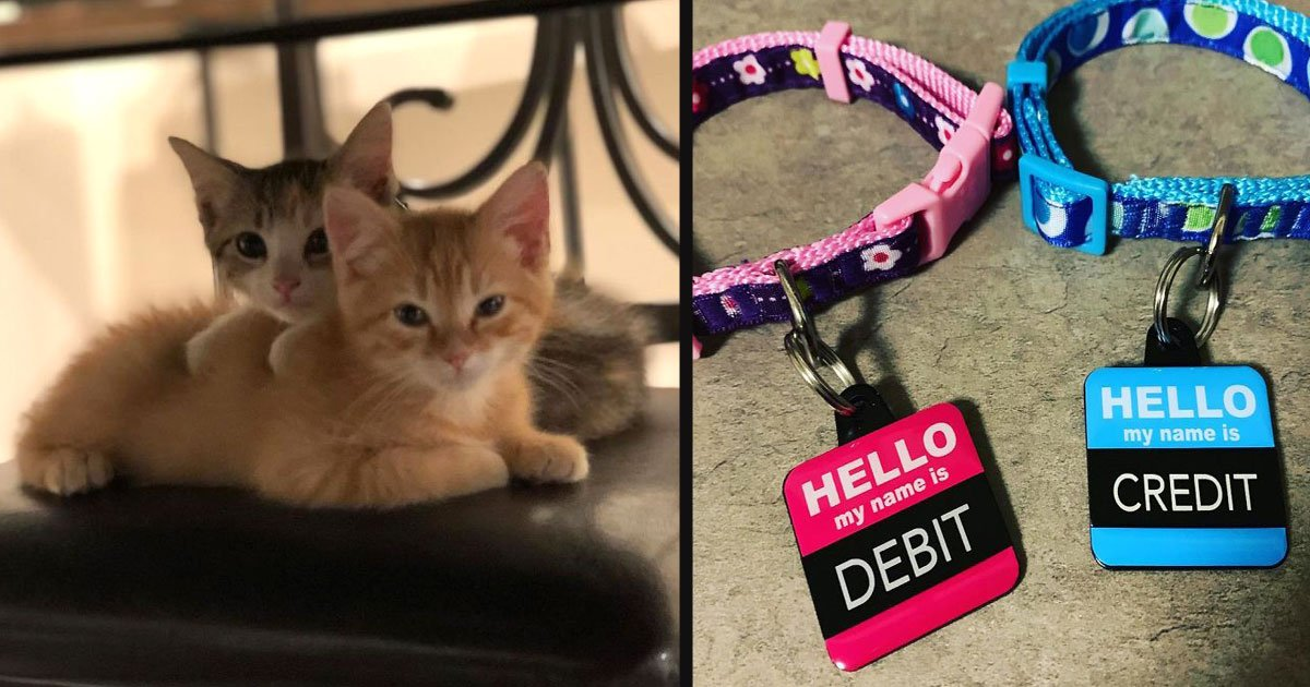 untitled 1 30.jpg?resize=412,232 - A Company Hired 2 Kittens And The Employees Are In Love With Their New Co-Workers