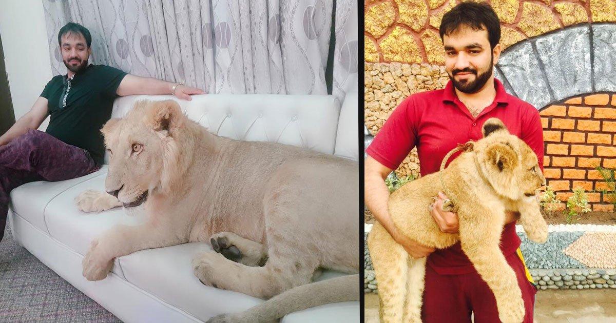 untitled 1 36.jpg?resize=366,290 - Cet homme a un lionceau comme animal de compagnie qui vit avec lui dans sa maison