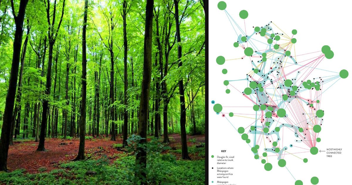 """untitled 1 76.jpg?resize=412,232 - Scientists Said Trees Secretly Talk To Each Other Using The """"Wood Wide Web"""""""