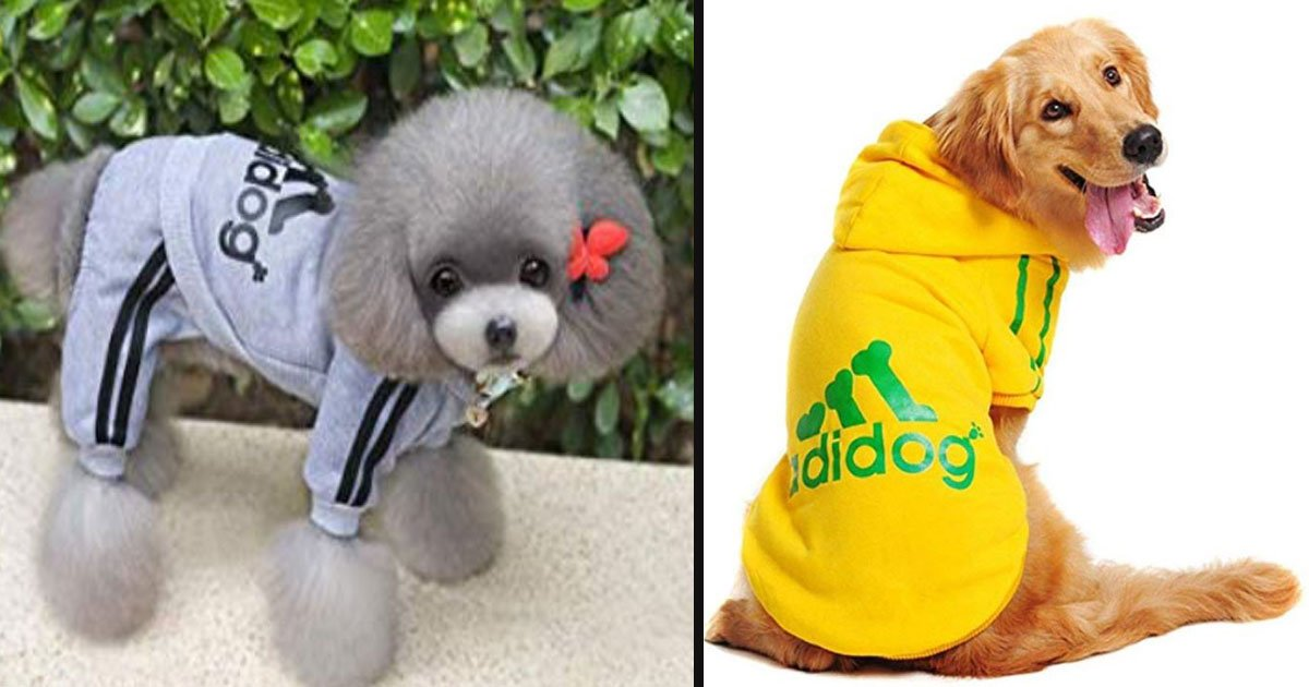 untitled 1 86.jpg?resize=412,232 - Amazon Is Selling Adidas-Inspired Outfits For Your Pooch