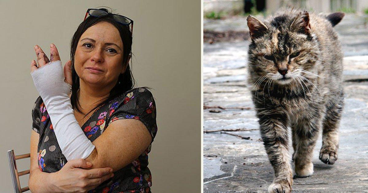 untitled 1 88.jpg?resize=1200,630 - Une femme a perdu son doigt après avoir été griffé par un chat errant