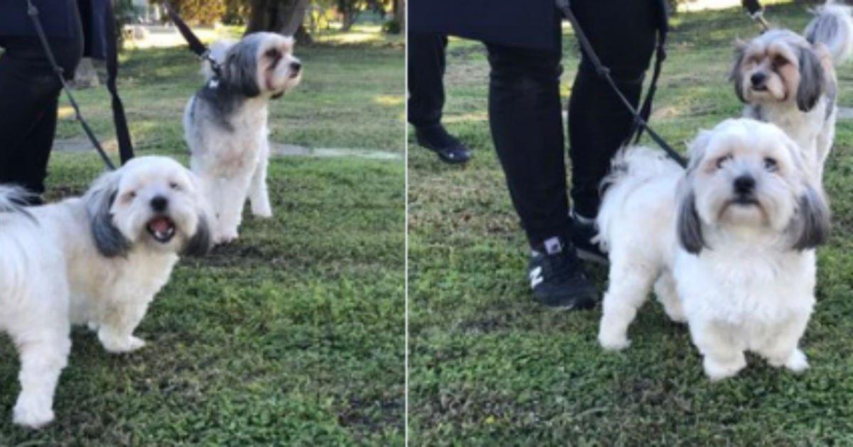 untitled 97.jpg?resize=412,232 - 강아지 두 마리가 '작은 영웅' 으로 칭송 받고 있는 이유 (영상)
