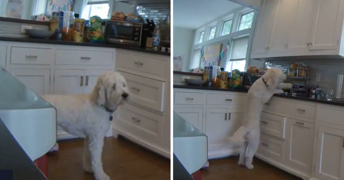 untitled design 1 1.png?resize=412,232 - This Funny Video Shows How Much Dogs Love Oreos