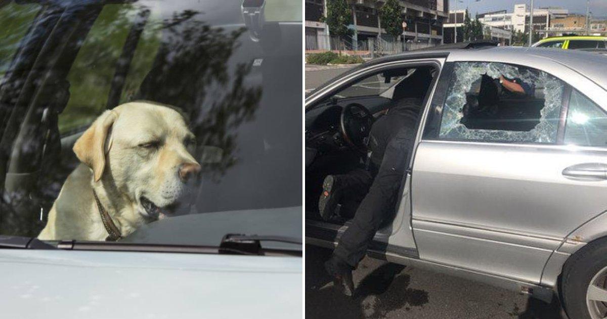 untitled design 19 1.png?resize=1200,630 - La police casse des vitres de voitures pour sauver des chiens