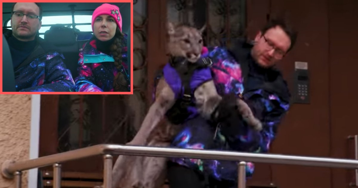untitled design 2 1.png?resize=412,232 - This Couple Lives With A Puma That Weighs 38 Kilograms