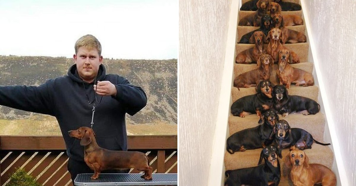untitled design 9.png?resize=300,169 - Teenager Who Loves Dogs Went Viral After Lining Up His Entire Army Of Dachshunds
