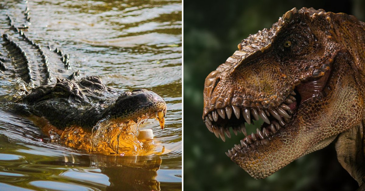 untitled design 93.png?resize=412,232 - Epic Showdown Between Alligator And T-Rex – Who Will Emerge Victorious!?