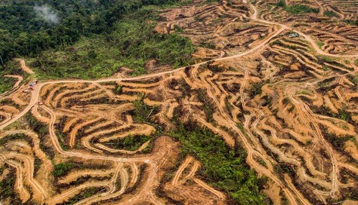 vue aerienne de la deforestation huile de palme sumatra indonesie nanang sujana ran 01 1.jpg?resize=300,169 - 88 % d'augmentation pour la déforestation en Amazonie