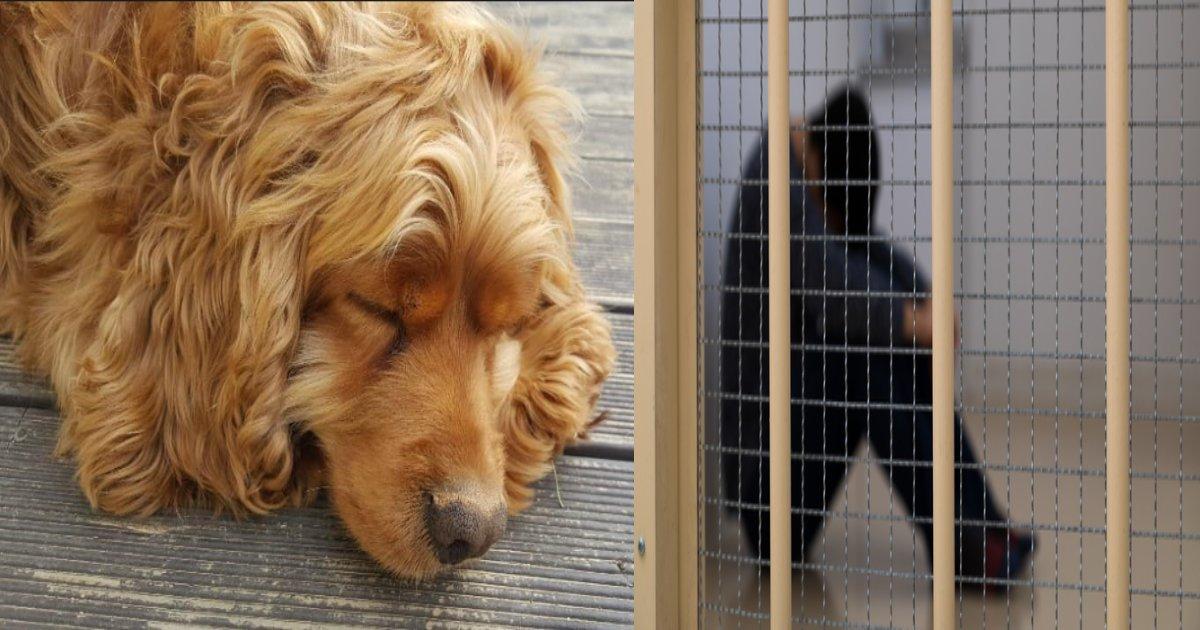 wangchang argen.png?resize=1200,630 - 1年以上警察署の前で動かない犬、その理由に涙が止まらない!