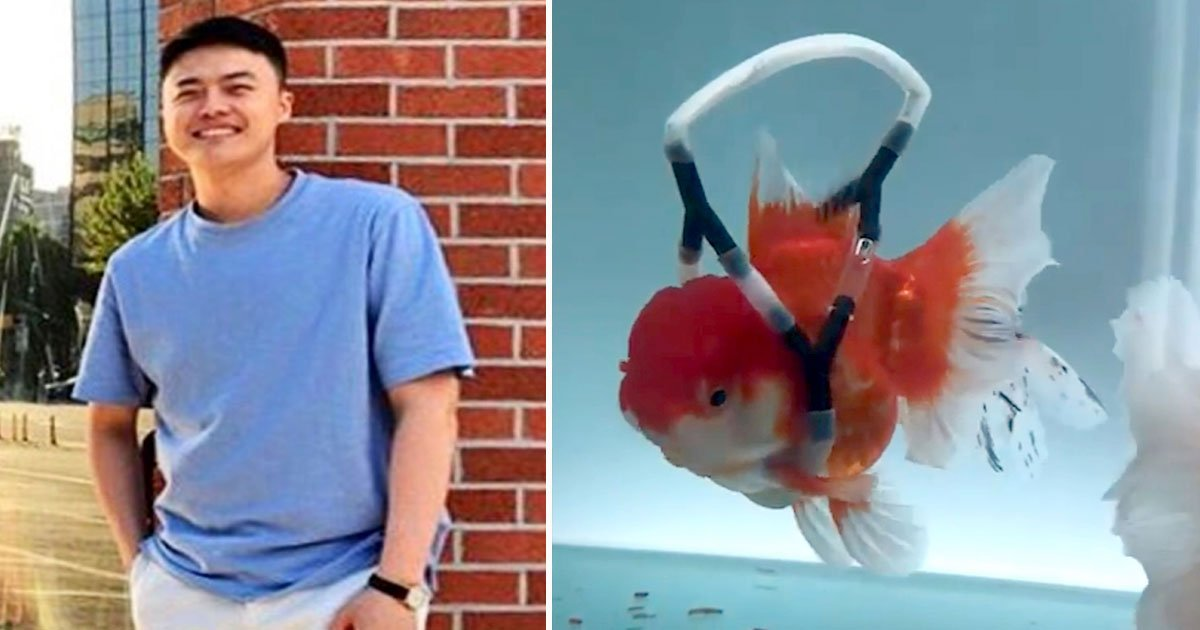 wheelchair goldfish.jpg?resize=412,232 - Man Created A Wheelchair For His Disabled Goldfish