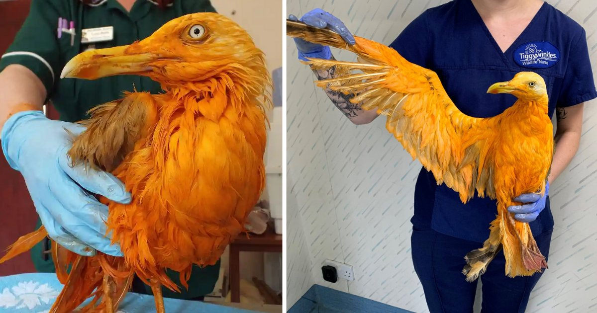 y1 4.png?resize=1200,630 - How A Bird Covered In Curry Was Mistakenly Thought of To Be A New Species