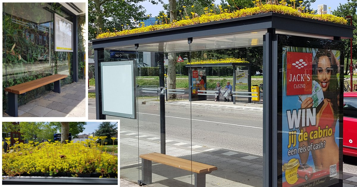 y3 10.png?resize=412,232 - Dutch City Coats 316 Bus Shelters with Plants to Promote Bees
