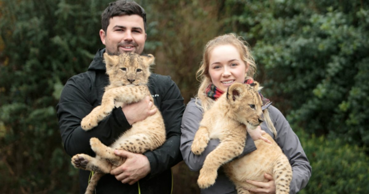 y3.png?resize=1200,630 - UK Man Allowed to Keep Lion Cubs In His Home Despite Protests from Neighbors