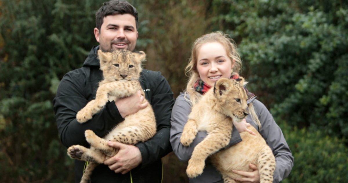 y3.png?resize=300,169 - Un britannique autorisé à garder des lionceaux chez lui malgré les protestations de son voisinage