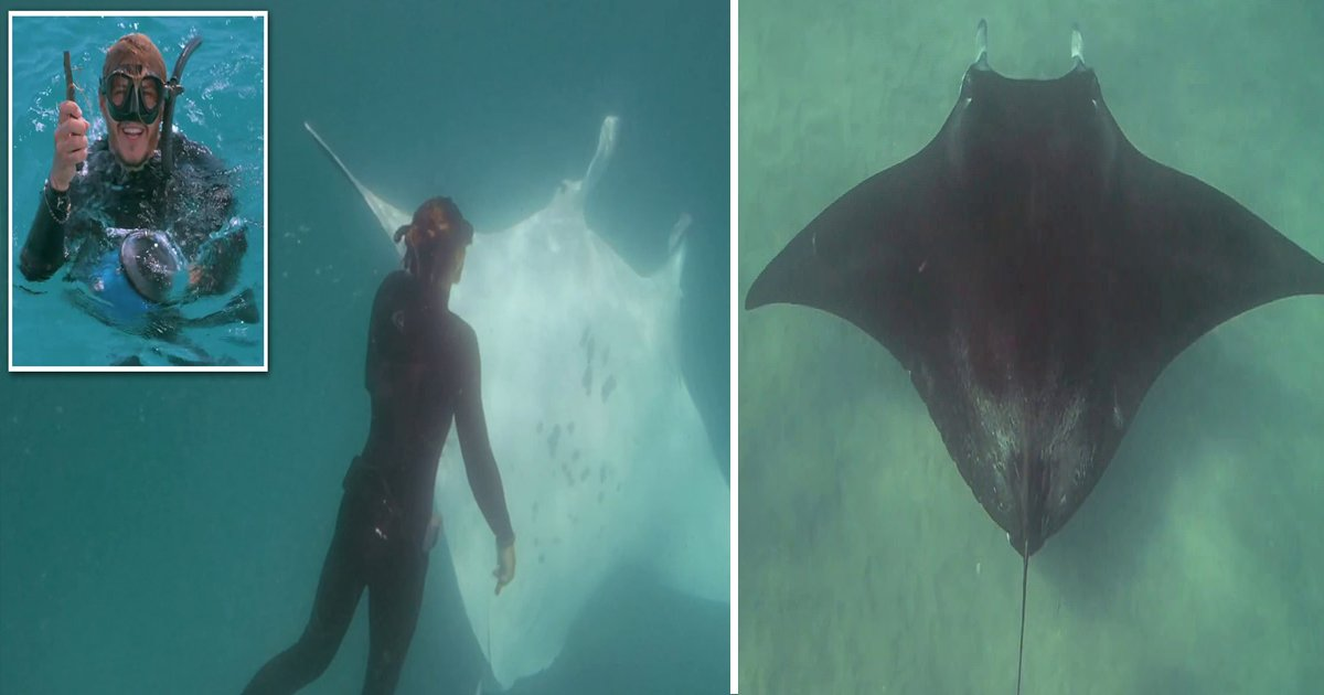zz.jpg?resize=412,232 - A Manta Ray Revolved Around A Diver Gave Him Signals That She Needed His Help
