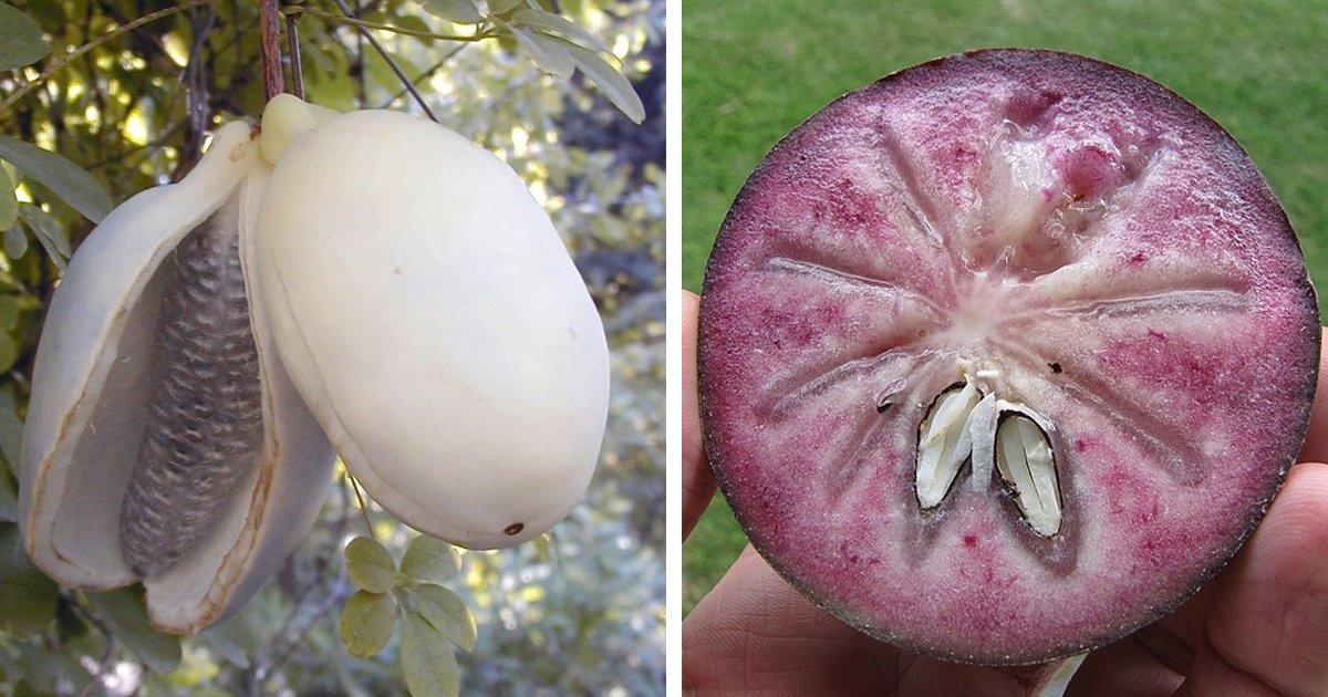 10 65.jpg?resize=1200,630 - 15 Frutas que no parecen hechas por la madre naturaleza