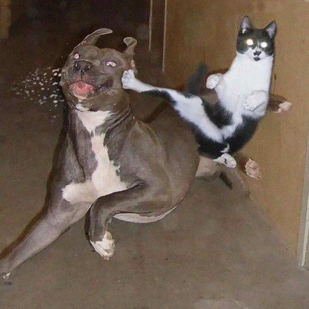 gatos-ninjas-11