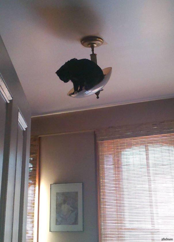 gatos-ninjas-14
