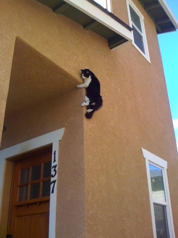 gatos-ninjas-20