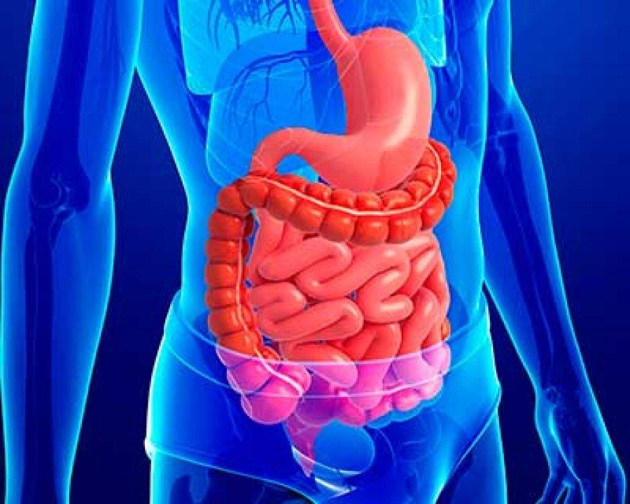 Resultado de imagen de sistema digestivo