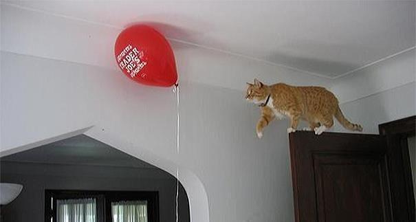 logica-dos-gatos-021