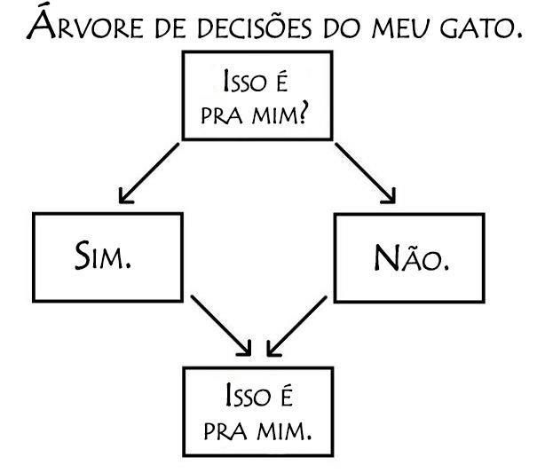 logica-dos-gatos-10